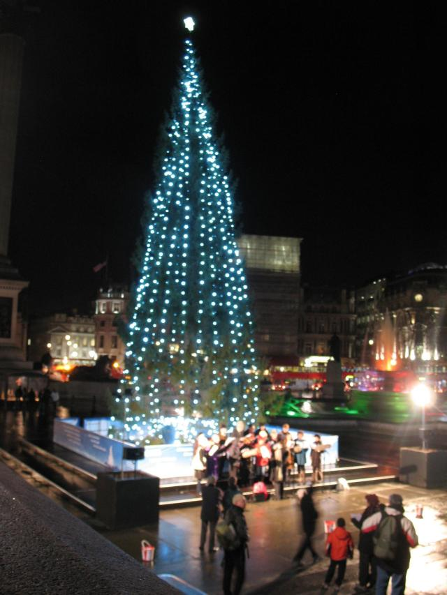 tree on Trafalgar Square, London