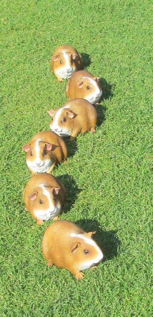 getting your guinea pigs in a row