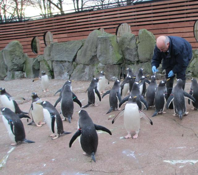 Lunchtime for Penguins