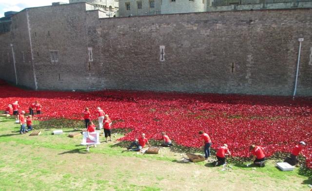 'planting' poppies
