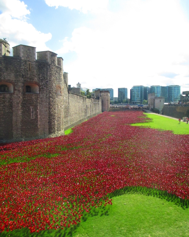 poppies at the Tower 1